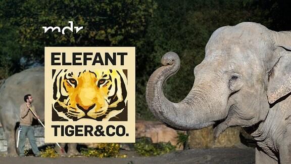 Logo der Sendung Elefant, Tiger und Co