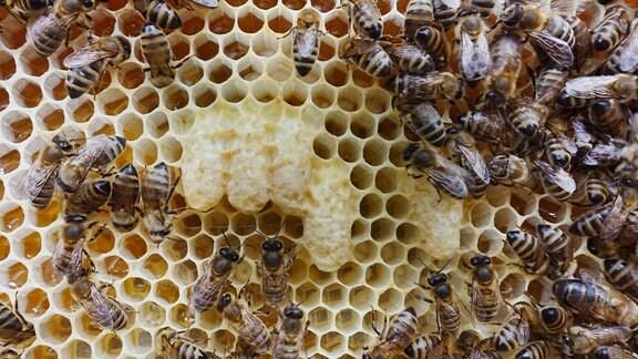 Wer Honig beim Imker kauft, unterstützt heimische Bienenvölker.