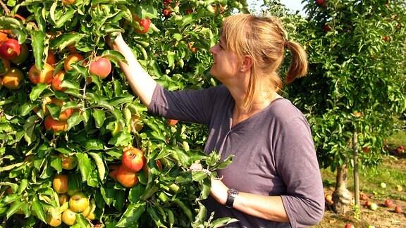 Julia beim Apfelpflücken