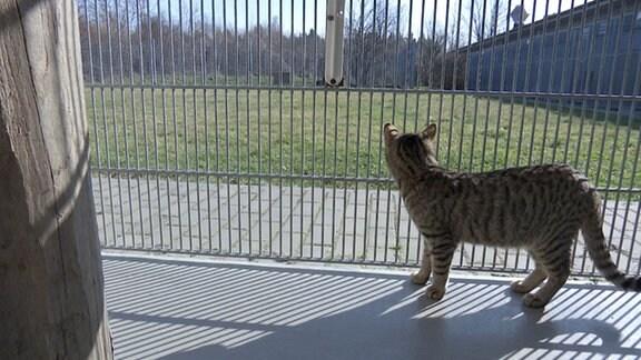 Katze im Tierheim Leipzig