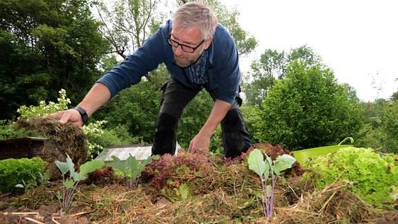 Jörg Heiß verteilt getrocknetes Gras auf einem Gemüsebeet.