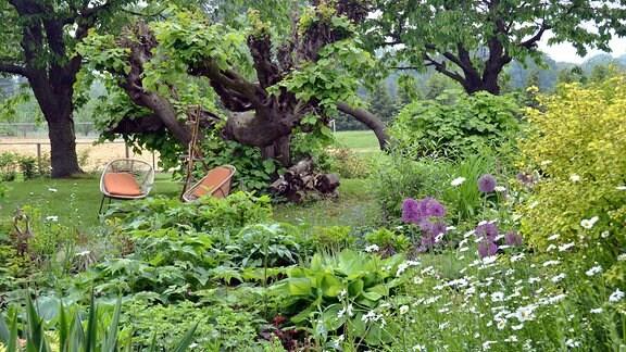 Gartenstühle zwischen Bäumen