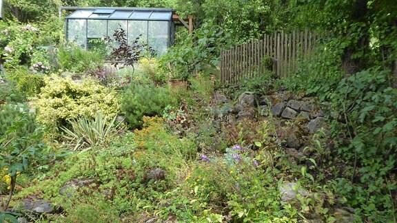 Wild wucherndes Grün in einem Garten, im Hintergrund steht ein Gewächshaus.