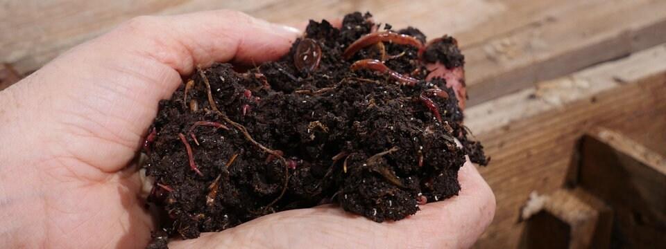 Kompostwürmer faq wurmkiste so klappt s mit eigenem bio dünger mdr de