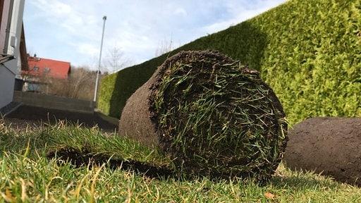 Zwei Bahnen Aufgerollten Fertigrasens Liegen In Einem Garten Mit Einer  Dichten, Grünen Hecke Im Hintergrund