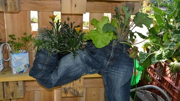 Jeans hose wachsen