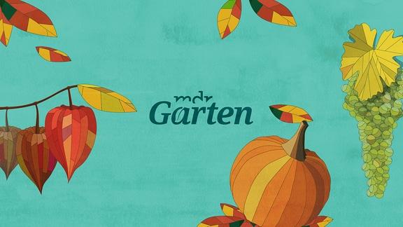 Der Schriftzug MDR Garten mit grafisch dargestellten Lampionblumen und Kürbis