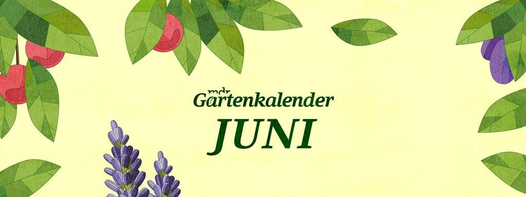 wasser sparen im garten tipps sommer, der mdr gartenkalender: gartentipps für juni | mdr.de, Design ideen