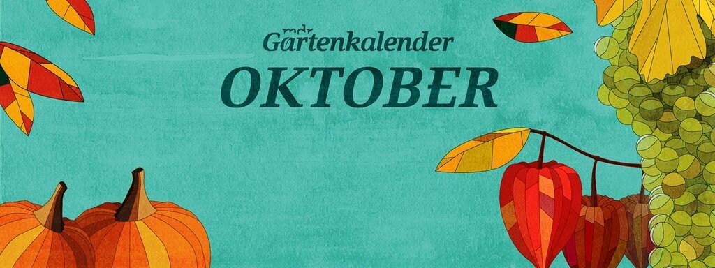 Der Mdr Gartenkalender Gartentipps Für Oktober Mdrde