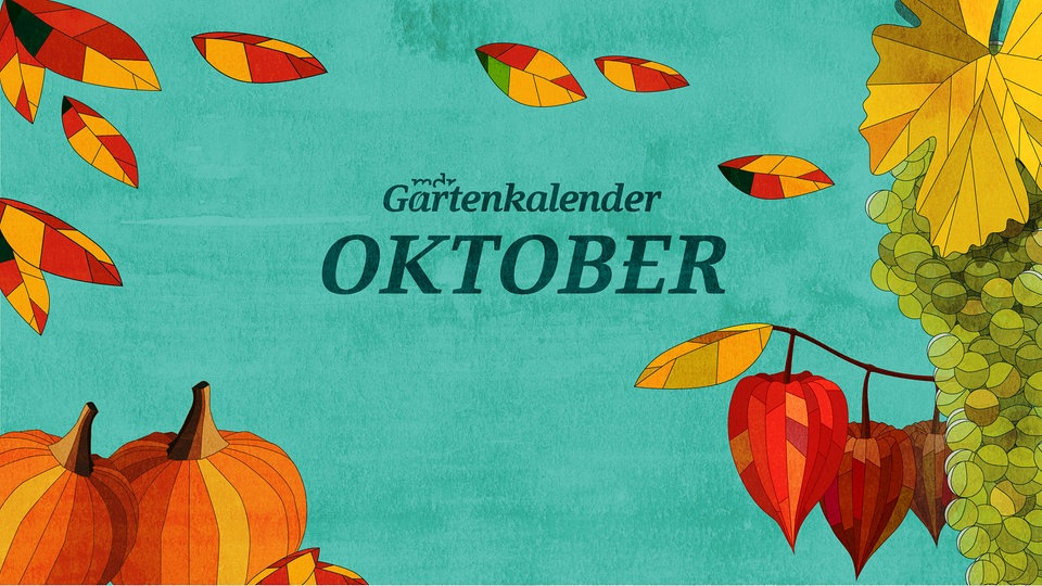 der mdr gartenkalender gartentipps f r oktober mdr de. Black Bedroom Furniture Sets. Home Design Ideas