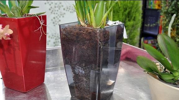 bepflanzter Orchideentopf mit Wassertank