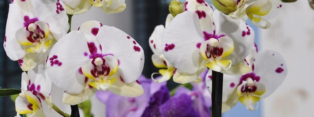 pflege von orchideen