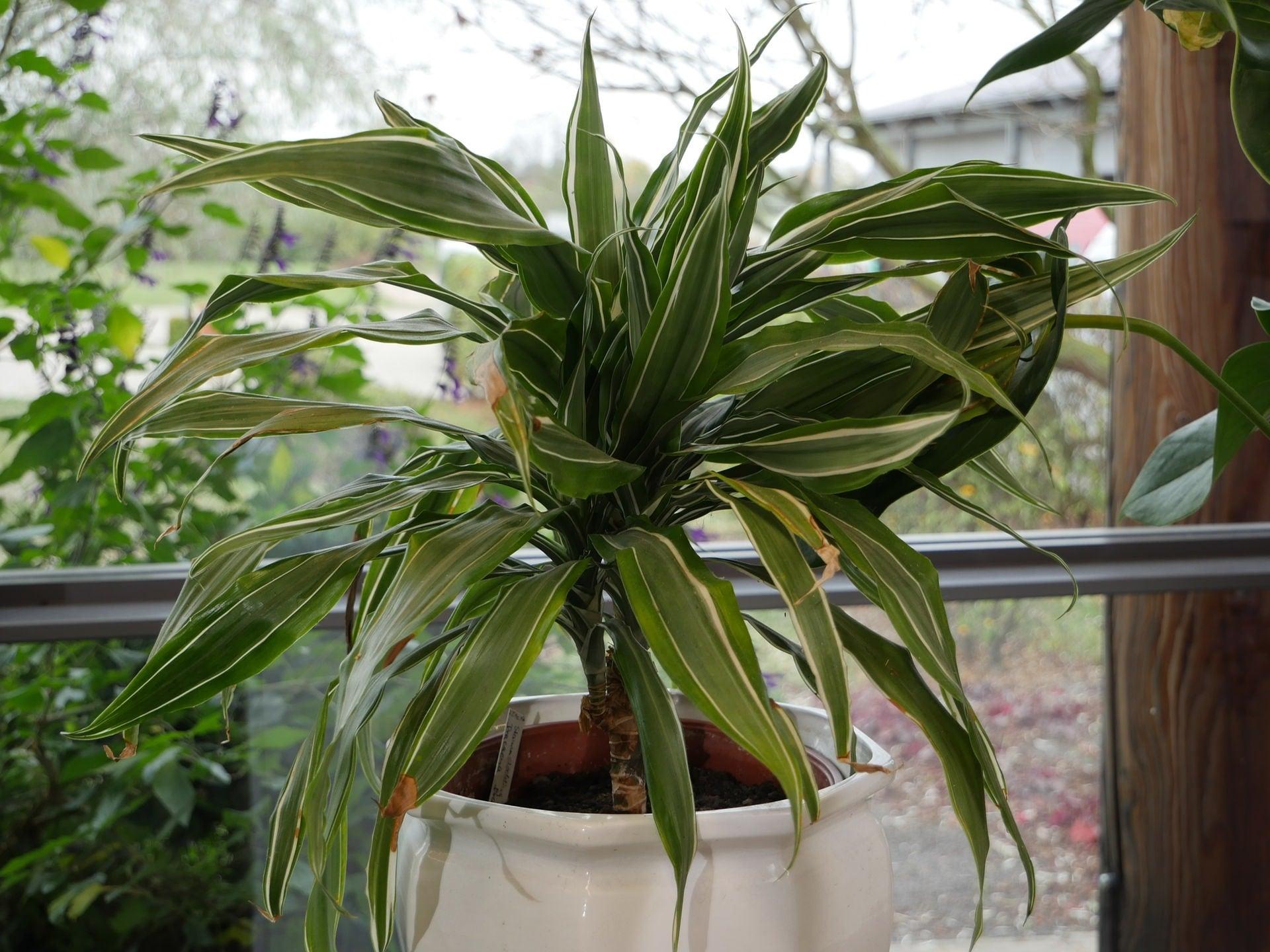 Diese zimmerpflanzen versch nern den winter mdr de for Pflanzen zimmer