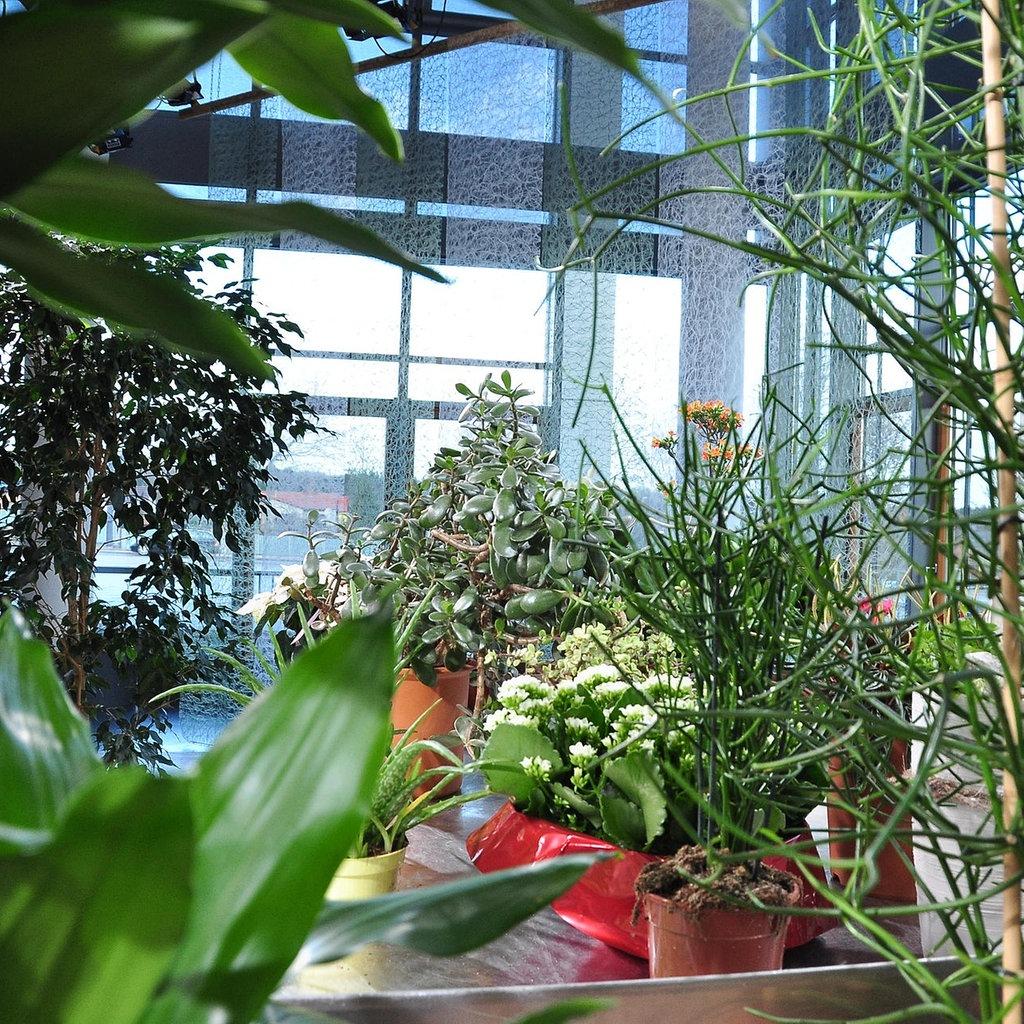 Themen-Spezial: Zimmerpflanzen richtig pflegen | MDR.DE