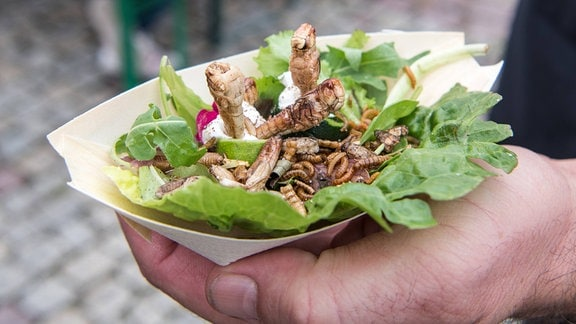 Ein Mann hält 2019 auf einer Street Food Veranstaltung eine Schale mit Heuschrecken, Mehl- und Buffalowürmern auf Salat.