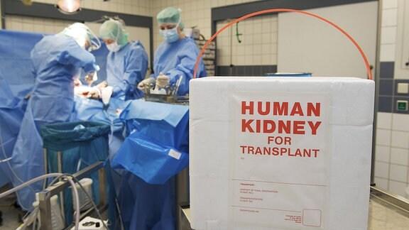 Transportbox für eine Niere bei einer Nierentransplantation