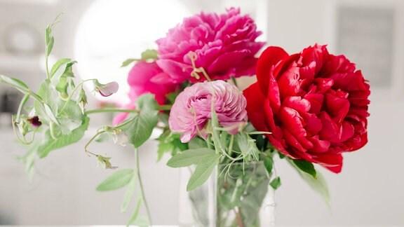 Pfingstrosen in einer Vase