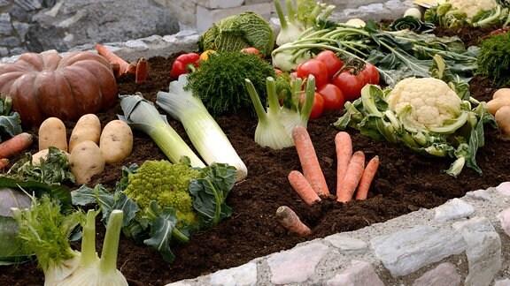 Gemüsehochbeet mit ertragreicher Ernte.