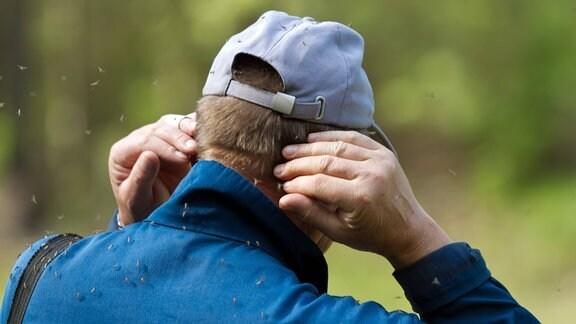 einen Mann umschwirren viele Mücken