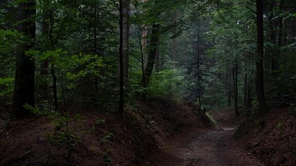 Ein Weg im Wald an der tschechichen Grenze bei Jonsdorf Landkreis Görlitz im Naturpark Zittauer Gebirge in Sachsen.