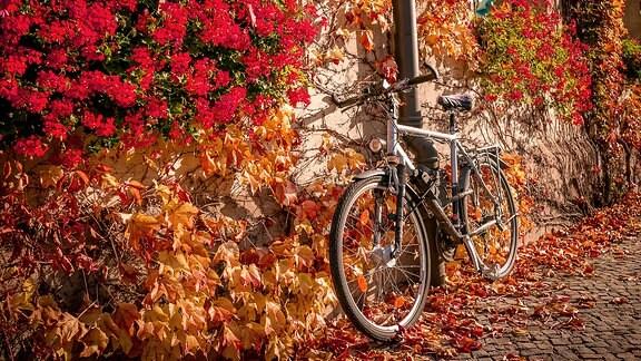 Fahrrad lehnt an einer Hauswand.