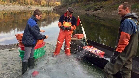 Drei Männer zupfen kleine Fische au einem Netz