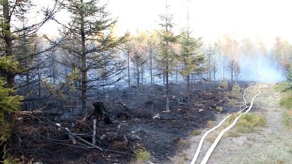 Waldbrand Böhmische Schweiz