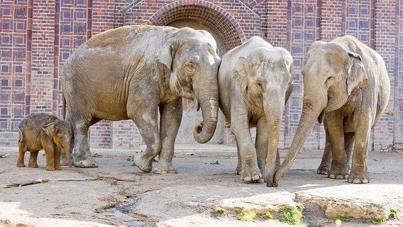 Elefanten aus dem Leipziger Zoo.