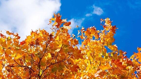 Orange gefärbte Blätter an einem Baum.