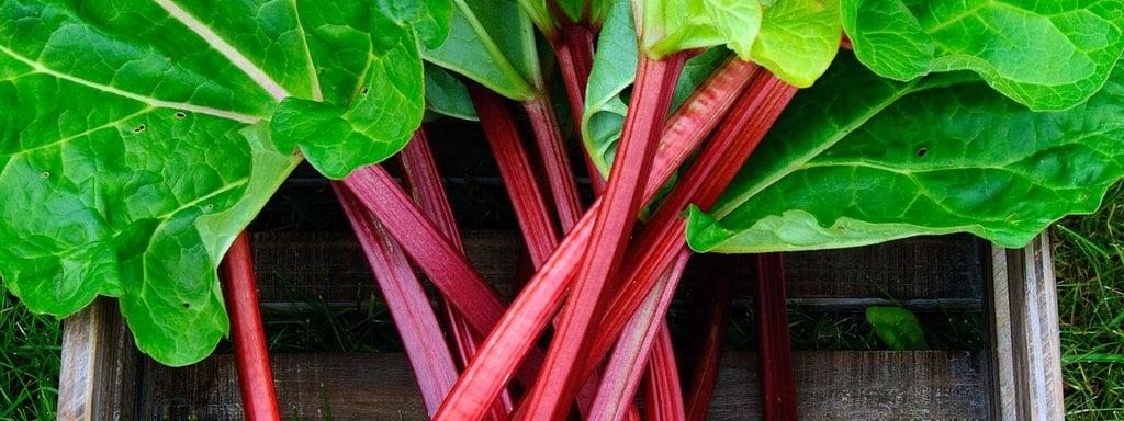 Atemberaubend Rhabarber anbauen, pflegen, ernten | MDR.DE #PY_91