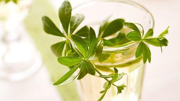 In einem Getränkeglas steckt ein grünen Zweig.