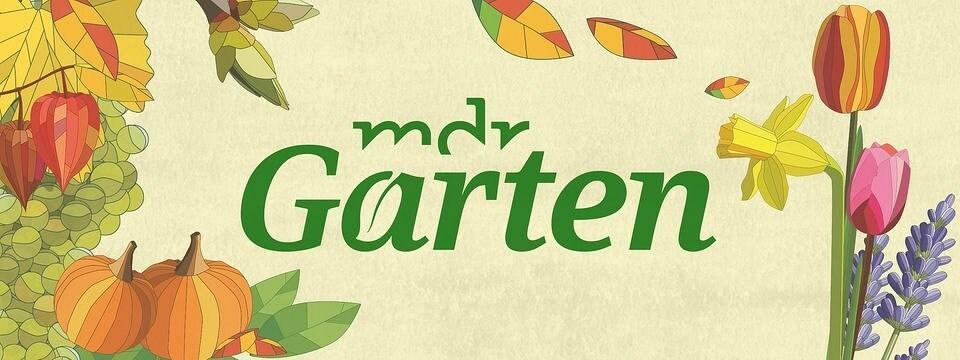 Mdr Garten Mdrde