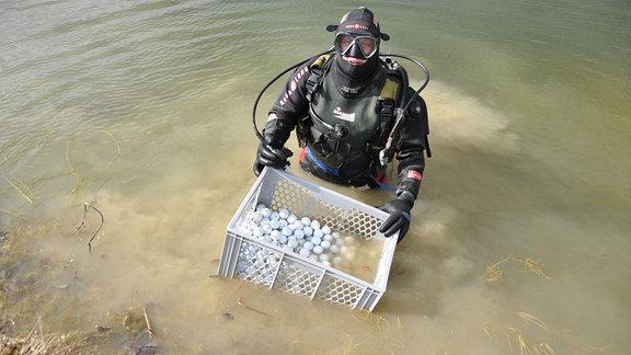 Ein Mann in einem Tauchanzug und einem Korb voller Golfbälle steht in einem Teich.