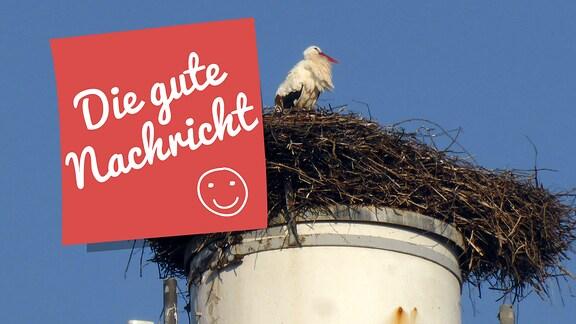 Storch auf einem Nest am Ortseingang von Wasungen