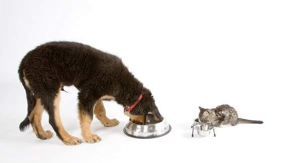 Hund und Katze fressen gemeinsam.