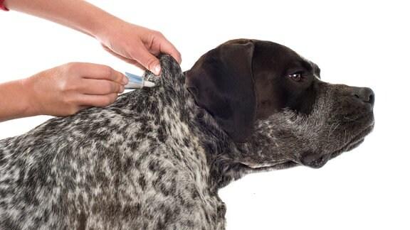 Eine Tube wird an das Fell eines Hundes gehalten