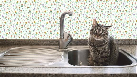 Eine Katze sitzt in der Spüle neben dem Wasserhahn