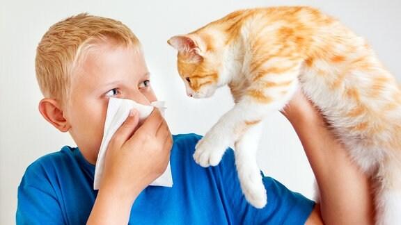 Symbolfoto Katzenallergie - ein Junge hebt eine Hatze und hält sich ein Taschentuch vor die Nase.