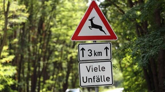 Ein Schild warnt vor vielen Wildunfällen.