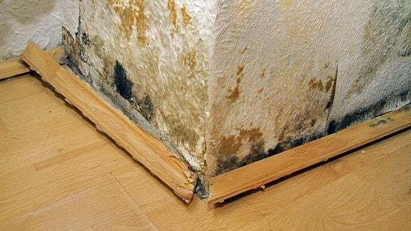 Stockflecken und abgelöste Scheuerleisten an einer durch Wasser beschädigten Wand
