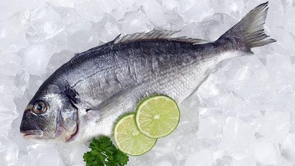 Ein Fisch liegt auf Eis.