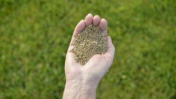 Rasensamen in einer Hand