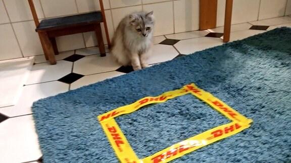 Eine Katze vor einem mit gelbem Klebeband auf einen Badvorleger geklebten Rechteck