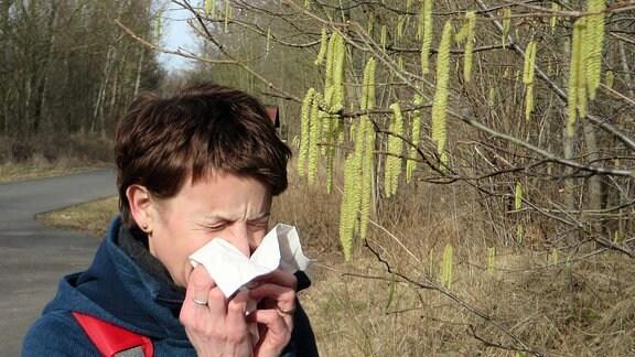 Frau schnäuzt vor blühenden Haselstrauch in Taschentuch.