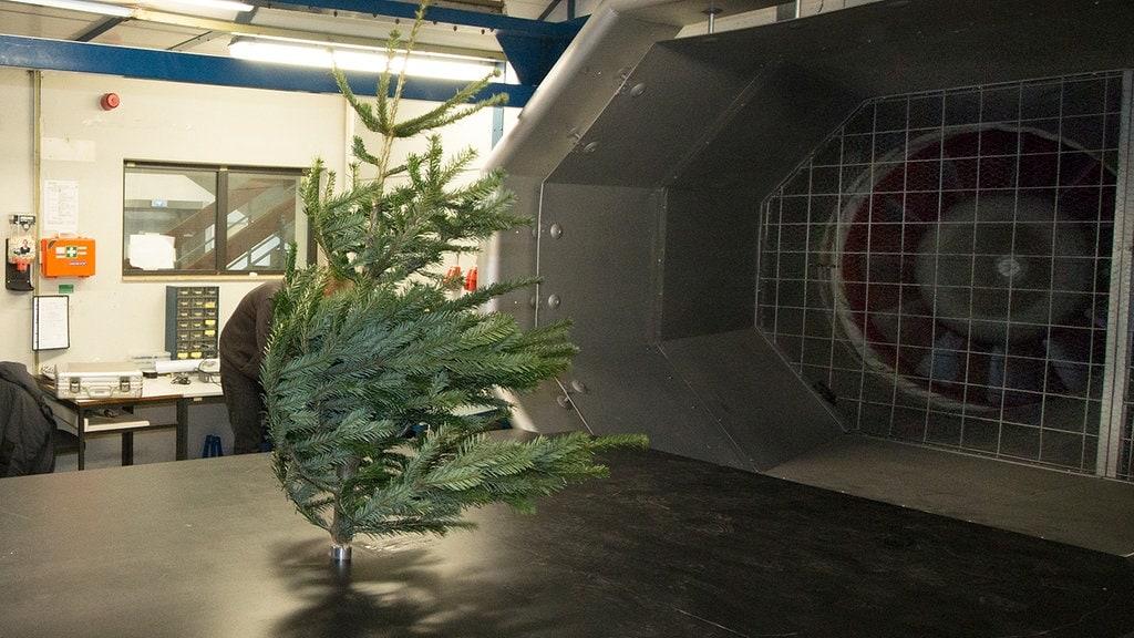 Wieviel Wind verträgt der Weihnachtsbaum? | MDR.DE