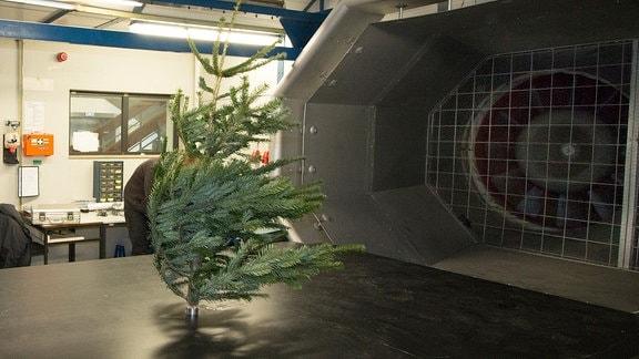 Ein kleiner Tannenbaum steht im Windkanal.