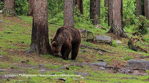 Wildlife_Winner2