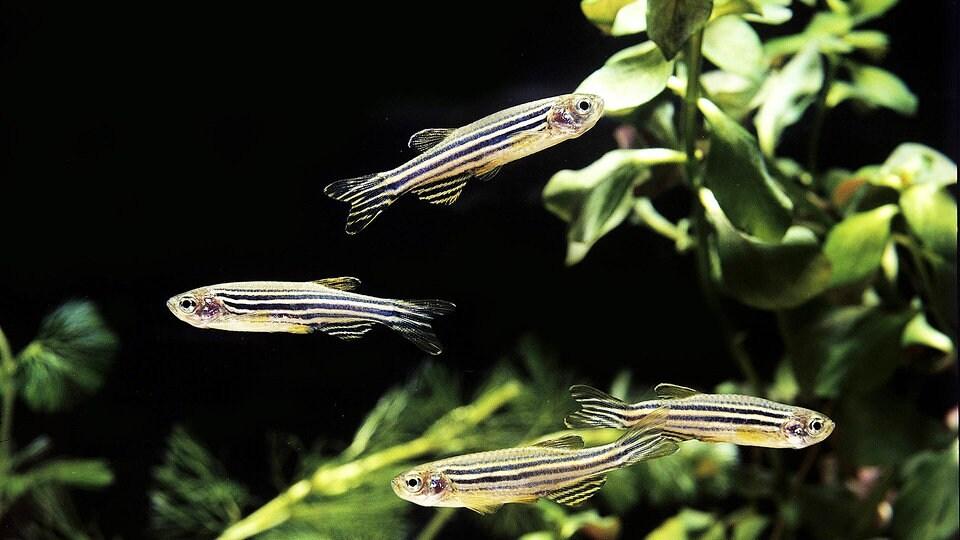 Fischkreutz Warum